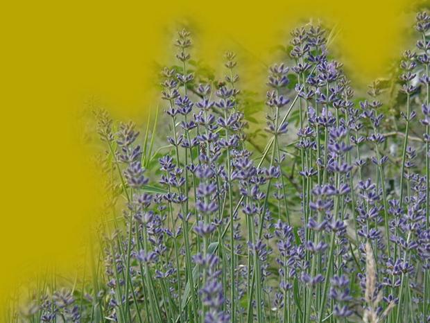 Mauvaise circulation veineuse et plantes m dicinales for Acheter des plantes par internet